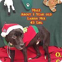 Adopt A Pet :: 1-6 - Triadelphia, WV
