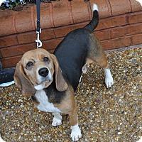 Adopt A Pet :: Maggie - Atlanta, GA