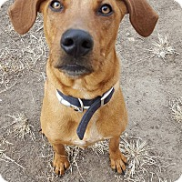 Adopt A Pet :: Bence - Fort Riley, KS