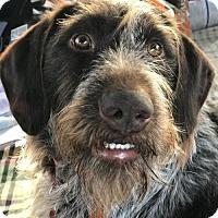Adopt A Pet :: McKenna - Denton, TX