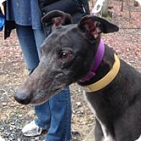 Adopt A Pet :: Donna Summer - Gerrardstown, WV