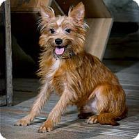 Adopt A Pet :: Declan - Valparaiso, IN