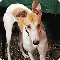 Adopt A Pet :: Malone - Ware, MA