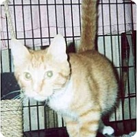 Adopt A Pet :: Berly & Taura - Clementon, NJ