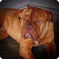 Adopt A Pet :: Kimbo-Adoption Pending - Phoenix, AZ