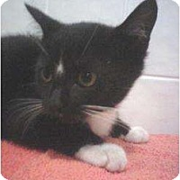 Adopt A Pet :: Salem - Lakeland, FL