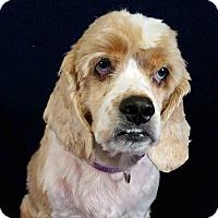 Adopt A Pet :: Walter Montgomery - Urbana, OH