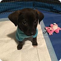 Adopt A Pet :: Chip - Grand Rapids, MI