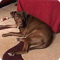Adopt A Pet :: Bentley - Sanford, FL