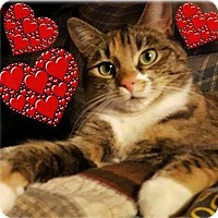 Adopt A Pet :: Baby - Harrisburg, NC