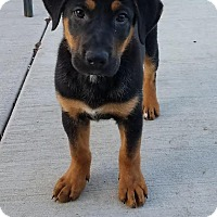 Adopt A Pet :: Thor - Huntley, IL