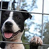 Adopt A Pet :: Delilah - Somerville, TX