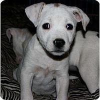 Adopt A Pet :: Petunia - Mesa, AZ