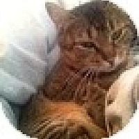 Adopt A Pet :: Roxanne - Vancouver, BC
