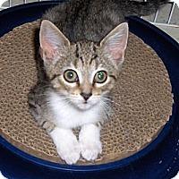 Adopt A Pet :: Flurry - Richmond, VA