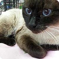 Adopt A Pet :: Fiona - Harrisburg, NC
