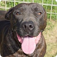Adopt A Pet :: Squirt - Iola, TX