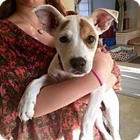 Adopt A Pet :: CHANCE BURFORD - Boca Raton, FL