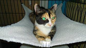 Calico Cat for adoption in Columbus, Ohio - Marti