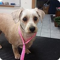 Adopt A Pet :: Petey - Santa Ana, CA