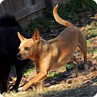Adopt A Pet :: kaden - Joplin, MO