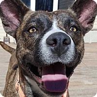 Adopt A Pet :: Madelynn - Concord, OH