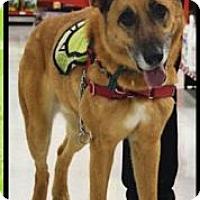 Adopt A Pet :: Wiley - Ogden, UT
