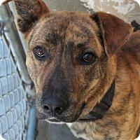 Adopt A Pet :: SOLO - Red Bluff, CA
