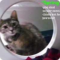 Adopt A Pet :: Spring - Muskegon, MI