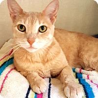 Adopt A Pet :: Ginger - Key Largo, FL