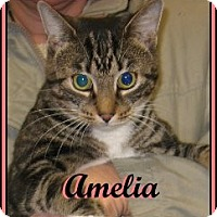 Adopt A Pet :: Amelia - Galloway, NJ