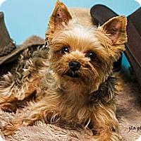 Adopt A Pet :: Buttons - Baton Rouge, LA