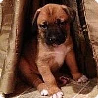 Adopt A Pet :: Mario - Seattle, WA