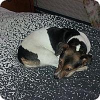 Adopt A Pet :: Roxy - Vaudreuil-Dorion, QC