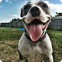 Adopt A Pet :: Grace - Calgary, AB