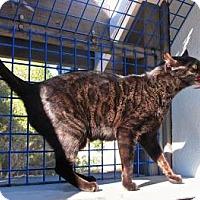 Adopt A Pet :: Sheeba - Davis, CA
