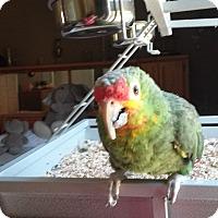 Adopt A Pet :: Jack - Independence, KY