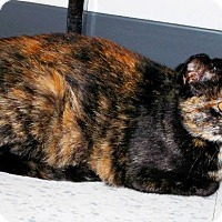 Adopt A Pet :: Amera - Edmonton, AB