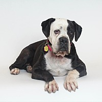 Adopt A Pet :: LIZ TAYLOR - Phoenix, AZ