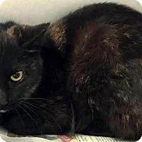 Adopt A Pet :: Jessie - Chattanooga, TN