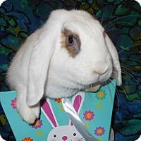 Adopt A Pet :: Iris - Williston, FL