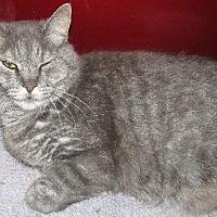Adopt A Pet :: Jb - Fort Walton Beach, FL