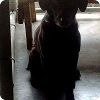 Adopt A Pet :: Gillie - Livingston Parish, LA