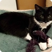 Adopt A Pet :: Sully - McHenry, IL