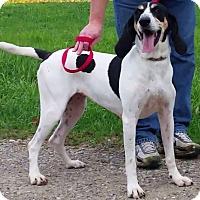 Adopt A Pet :: Ellie Mae - East Sparta, OH