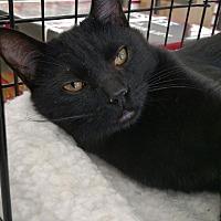 Adopt A Pet :: Frankie - Nuevo, CA