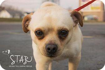 Chihuahua/Pug Mix Dog for adoption in Northville, Michigan - Kermit ADOPTION PENDING