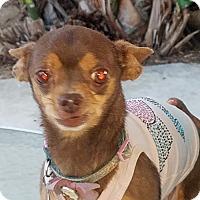 Adopt A Pet :: Paris - Fullerton, CA