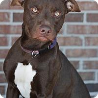 Adopt A Pet :: Tyrek - Pensacola, FL