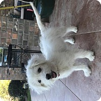 Adopt A Pet :: Nova - Houston, TX